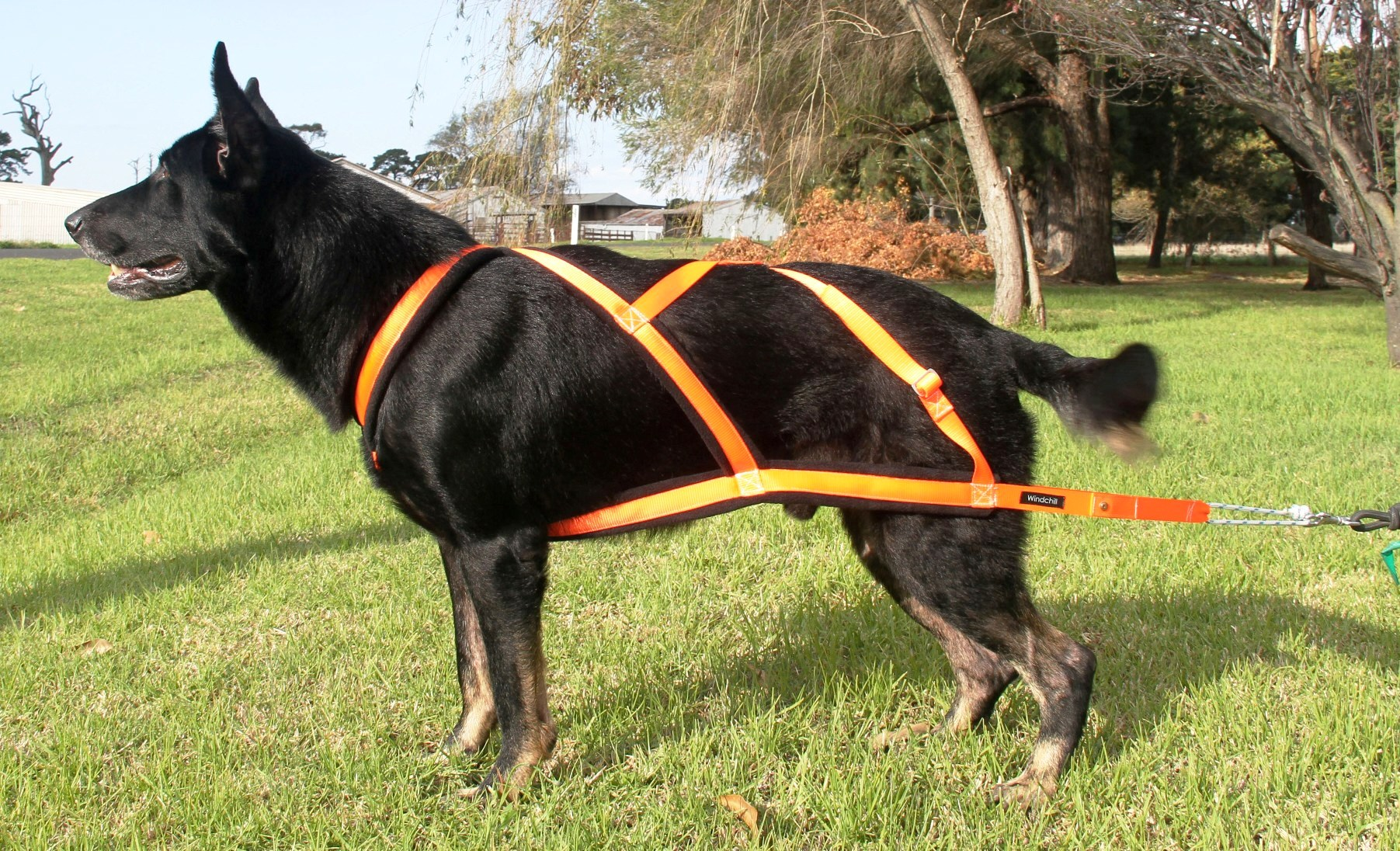 Weight Pull Harnesses. Weight Pull Harness. Wiring. Homemade Dog Pulling Harness At Scoala.co